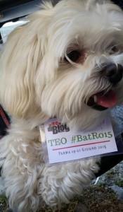 BatRo15-TEO