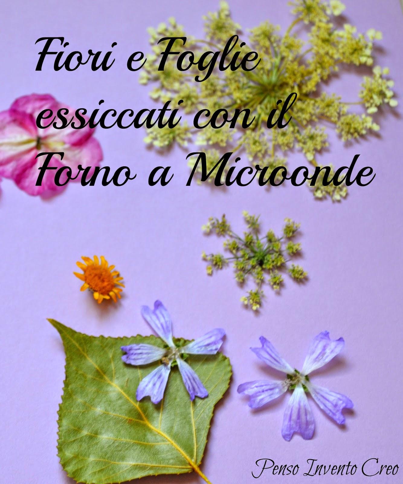 Come Seccare Le Piante come essiccare le foglie al microonde